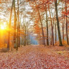 Autumn: A Time of Transformation